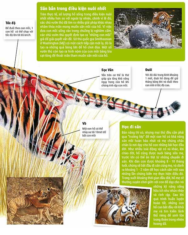 Ước tính cho thấy phạm vi thích hợp nhất để hổ vồ lấy con mồi là khoảng 6 - 9 mét.