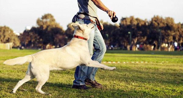 Người nuôi chó, đa phần đều sở hữu tính cách hướng ngoại