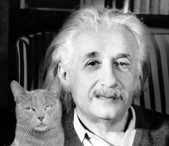 Người nuôi mèo có khả năng sáng tạo tốt hơn, chỉ số thông minh cũng ở mức cao hơn