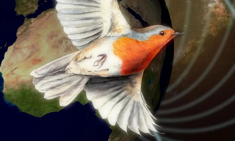 Birds Use Quantum Mechanics to See Magnetic Fields, New Research Suggests