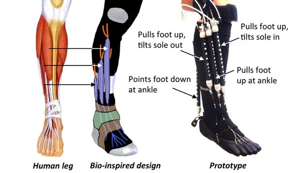 These Robotic Super Socks Will Aid Rehabilitation