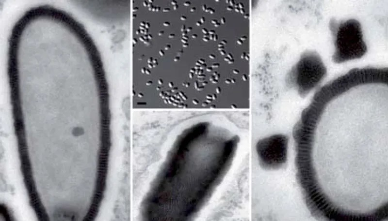 Científicos reaniman un nuevo virus de hace 30.000 años encontrado en Siberia
