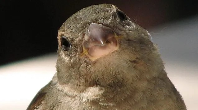So It Turns Out That Sparrows Are Evil