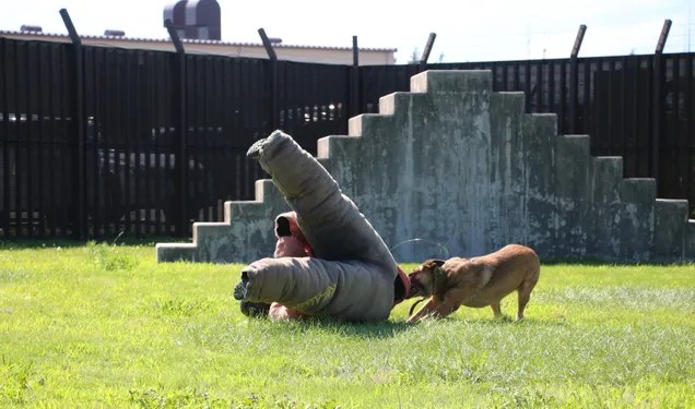 What It's Like To Be Attacked By An Attack Dog