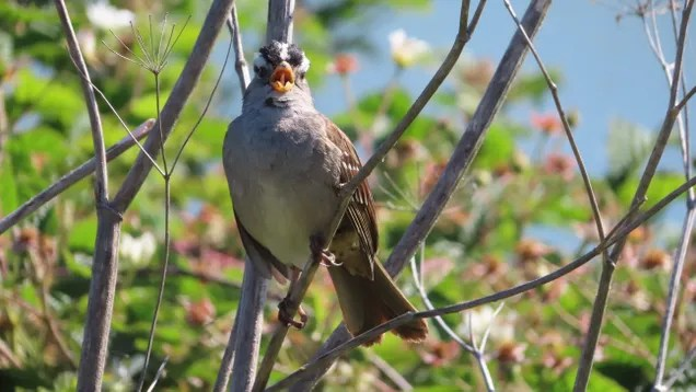 ka4keayrue2b6jdcebec The Quiet of Covid-19 Has Birds Singing Sultrier Songs | Gizmodo