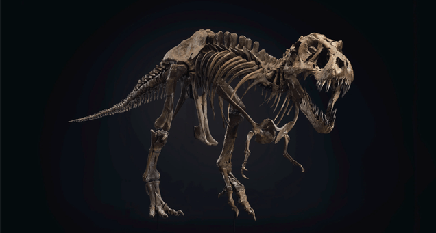 bunethlcpmlouhmz1ik6 Auction of Unusually Complete T. Rex Skeleton Could Smash Sales Record   Gizmodo