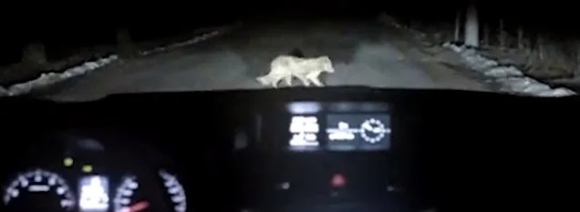 This video of a car hitting a dog is not what it seems