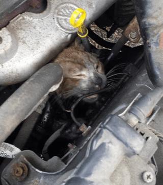 Incredible Feline Survival Stories (2/5)