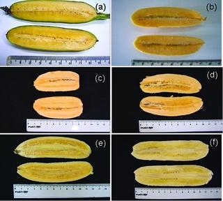 Un plátano anaranjado modificado genéticamente para combatir el hambre