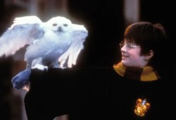 Harry Potter followers can blow their New 12 months's Day watching the entire collection on HBO