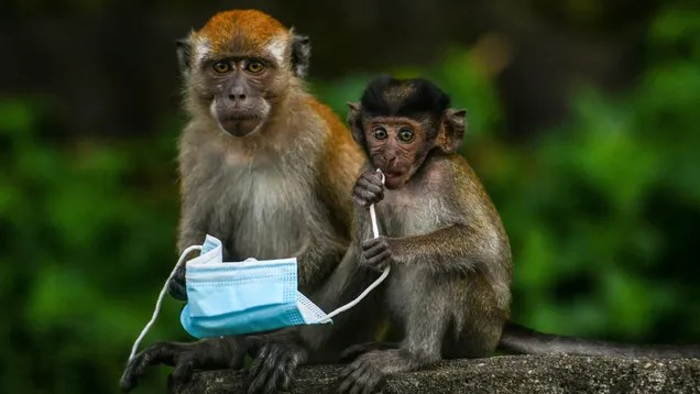 3f9a0effee869dff914ab85f7ca6f733 China Reports First Human Case and Death From Rare, Highly Fatal Monkey B Virus | Gizmodo