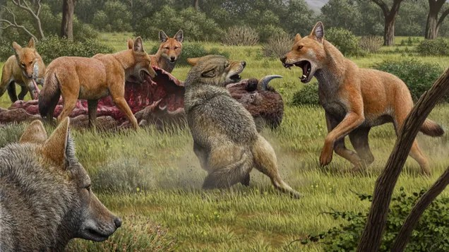 c9ezbm9b9kqvfontoviv The Story of Real-Life Dire Wolves Is Finally Emerging | Gizmodo