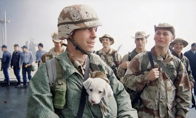 The Loyal Dogs Who Served Alongside Human Soldiers In War