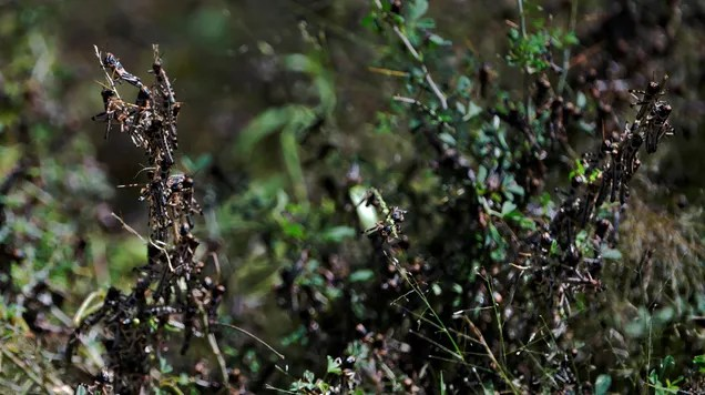 etuglq2selax1a4lvvck Locusts Are Ravaging the Horn of Africa—Covid-19 Is Making Things Worse | Gizmodo