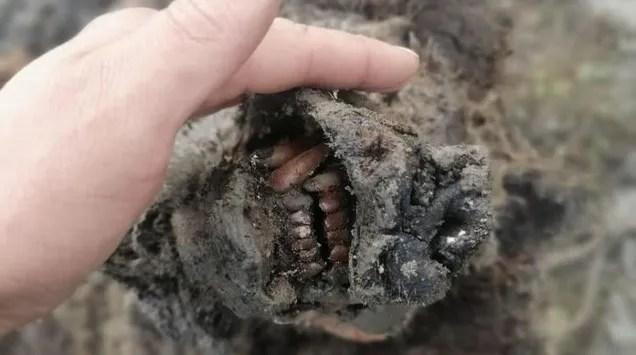 ci2yz4j6pxjyzuqsrmnf Ice Age Cave Bear Found Exquisitely Preserved in Siberian Permafrost | Gizmodo