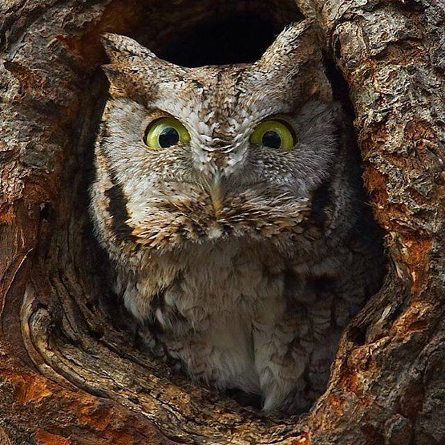 Gaze Deeply Into the Eyes of This Soul-Eating Owl