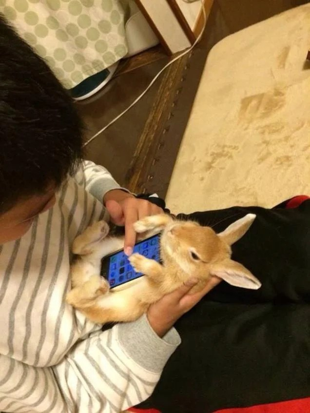 Don't Use Real Rabbits as Your Smartphone Case
