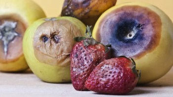 Image result for rotten fruit