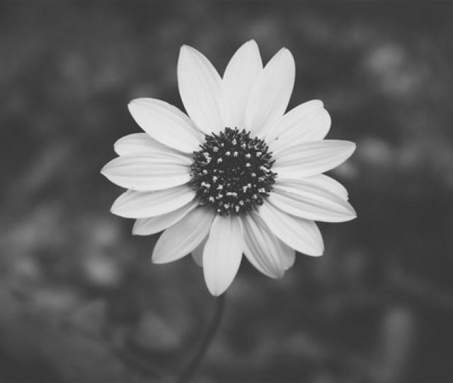 Black And White Aesthetics Desktop Wallpaper Art Free Photo