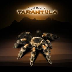 Паук Тарантул | Tarantula by Yigal Mesika