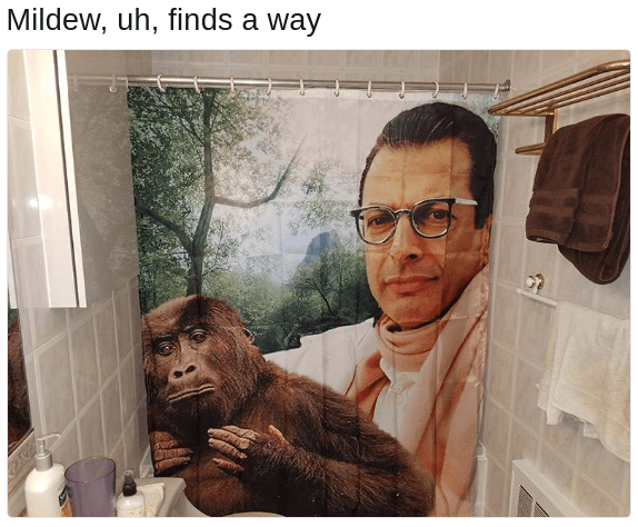 life uh finds a way know your meme