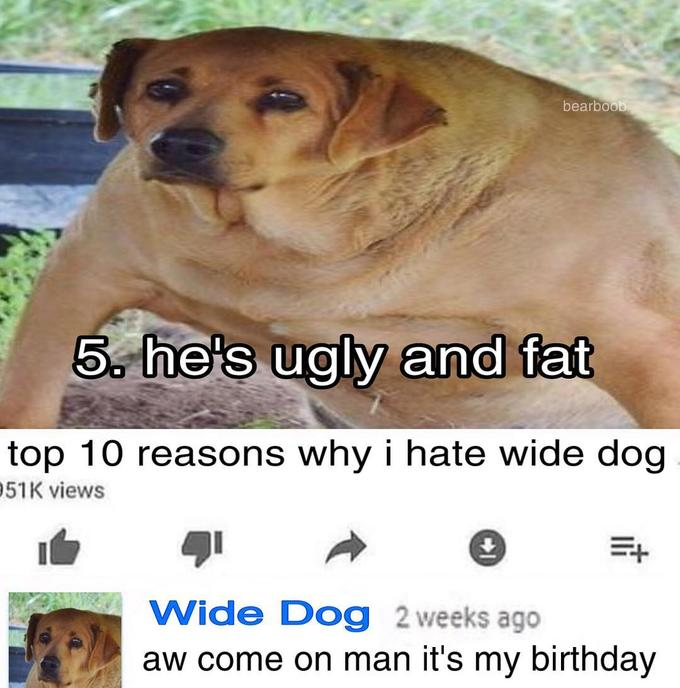 bearb00 5 he's ugly and fat top 10 reasons why i hate wide dog 51K views Wide Dog 2 weeks ago aw come on man it's my birthday Dog breed Dog Mammal Canidae Carnivore Companion dog Snout Photo caption