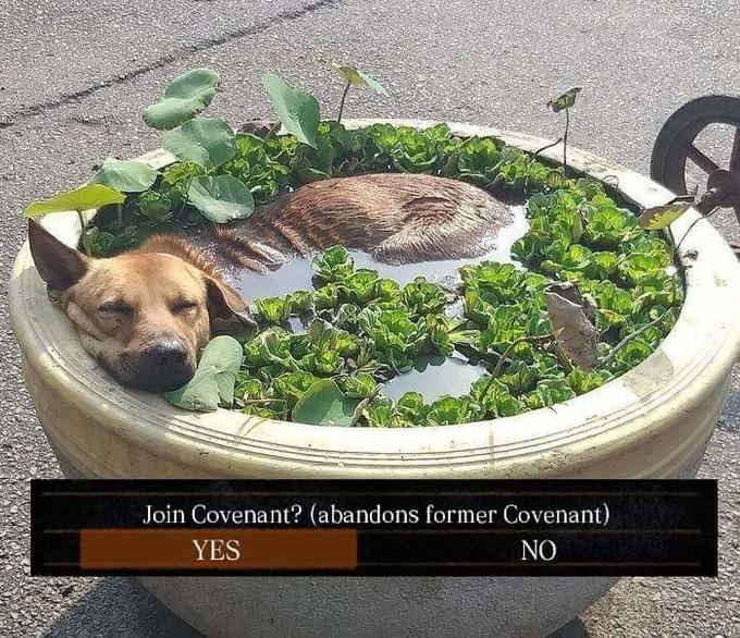 Join Covenant? (abandons former Covenant) YES NO Dog Dog breed Dog Carnivore Ingredient Fawn Snout