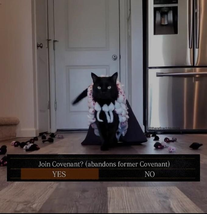 l@therefinedclavmore Join Covenant? (abandons former Covenant) YES NO Cat Kitten Dog Carnivore Door Purple Costume accessory Home door Felidae Violet Small to medium-sized cats