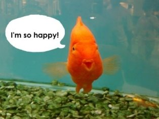 Image result for happy fish