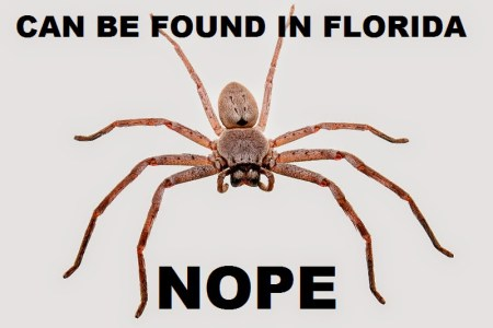 nope spider meme » Full HD MAPS Locations - Another World ...