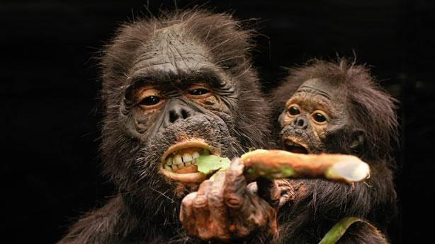 7. Homo Floresiensis
