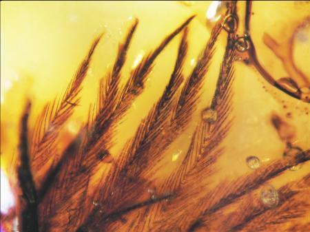70 milyon yıllık sır böyle çözüldü!