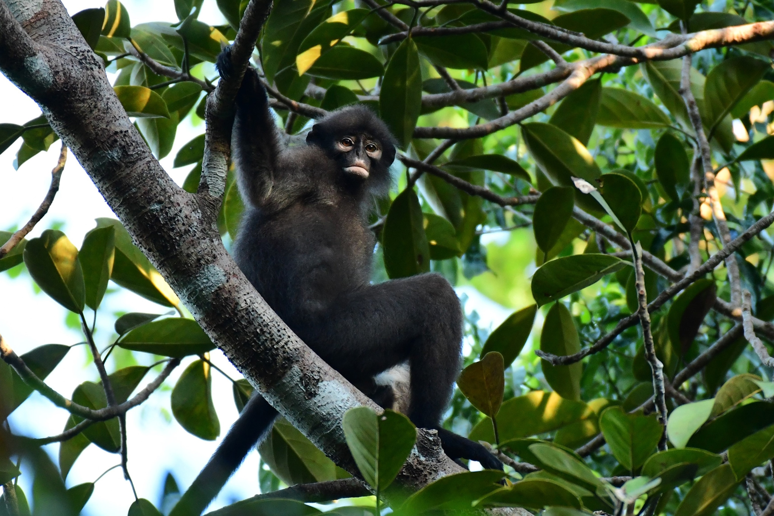Among the most important genres are: New Monkey Species Found Hiding In Plain Sight