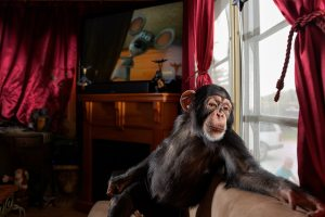 Exotic pet trade, explained