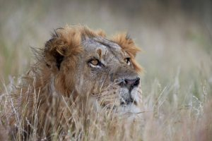 Tips for responsible wildlife tourism