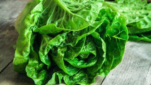 lettuce 620