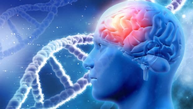 Experts Identified Brain Chemical That Affects Learning Ability