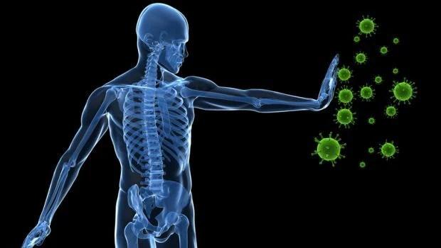 immune system 620x350