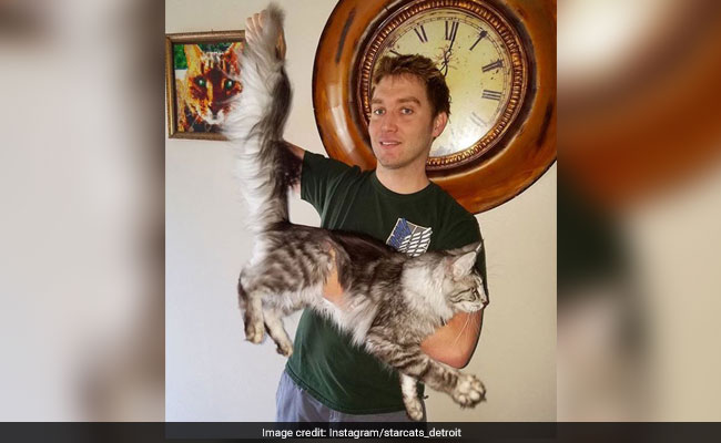 Biggest House Cat In The World 2017