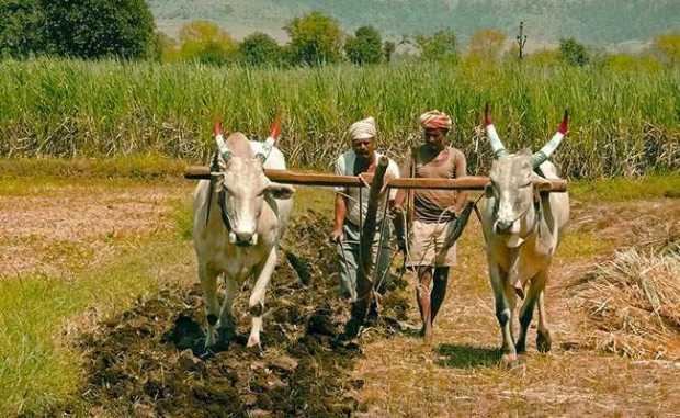 farmers istock 650