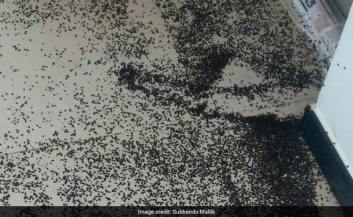 Bhubaneswar Residents Fight 'Crores And Crores' Of Stink Bugs. Watch If You Dare