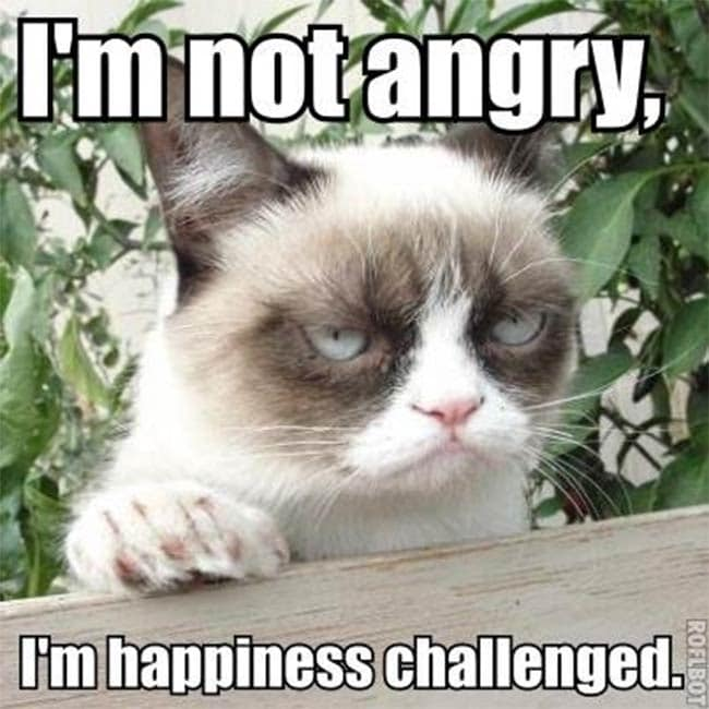 Grumpy Cat, Wipe That Frown Off, You're Rich