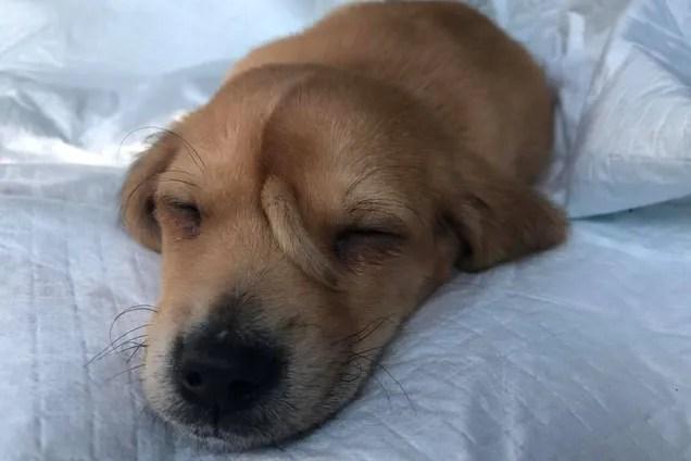 В США нашелся пес с хвостом на голове - фото - новости мира