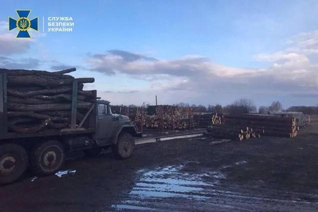Викрав лісу на 200 тисяч: на Черкащині засудили ексдиректора лісгоспу