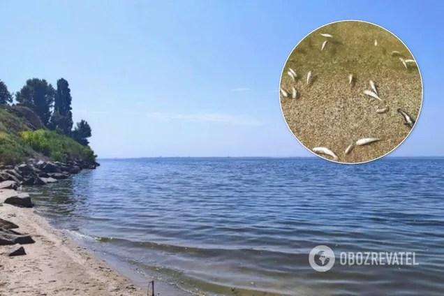На Днепропетровщине массовый мор рыбы: чиновники объяснили ...