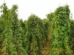 How To Start Yam Farming In Nigeria