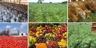 19 Business Opportunities In Agriculture Sector In Nigeria