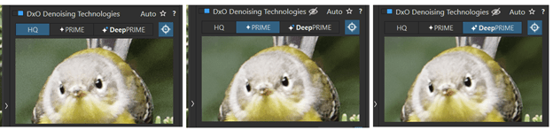 HQ, Prime, and DeepPrime noise reduction in DxO PhotoLab