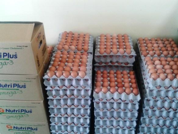 Egg_Wholesaler