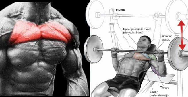 Construct Your Higher Chest With Three of the Finest Higher Chest Workout routines